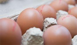 Was steht auf dem Ei? Eierkennzeichnung