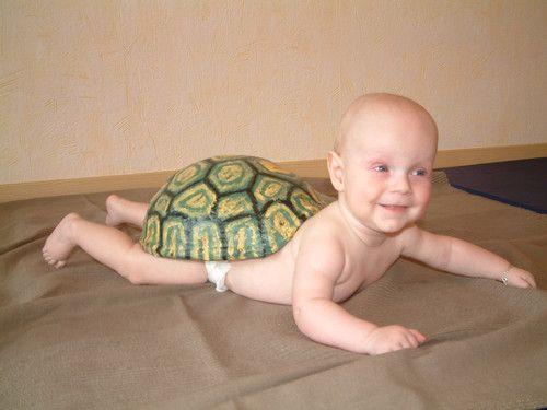 Mal sehen, ob ich mal schneller bin als eine Schildkröte
