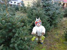 Weihnachtsbaum Teil 2