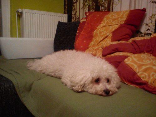Baby kommt bald im Sommer, bis dahin entspannt sich vor allem unser Hund!